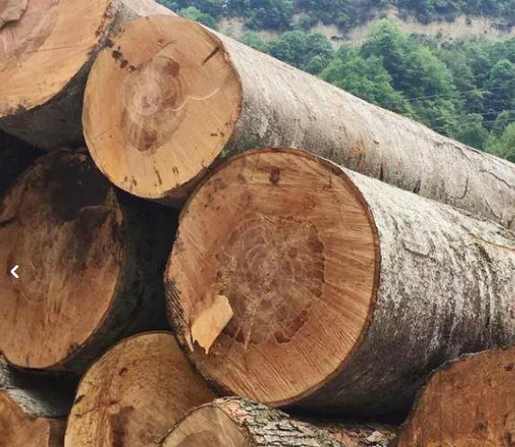 چوب جنگلی.درختان میوه وغیره شمارو خریداریم