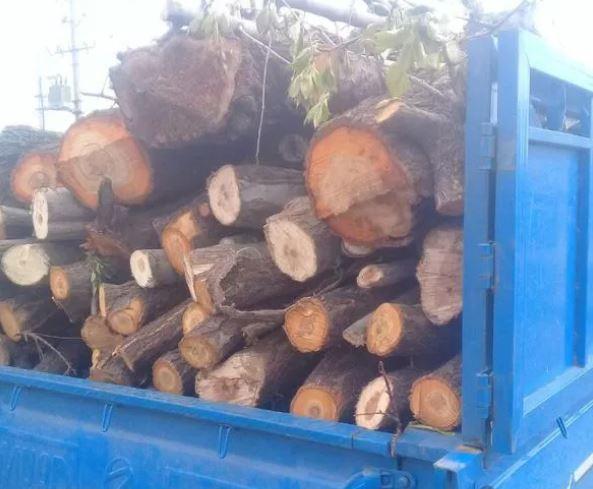 فروش وخرید انواع چوب