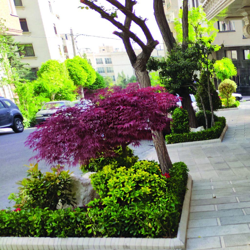 طراحی و اجرای فضای سبز روف گاردن و دیوار سبز